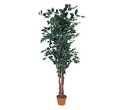 Ficus Artificial Leaf Verde 176Cm
