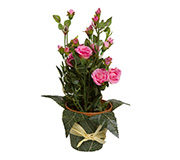 Mini Rosa Artificial Dongli Rosa 29Cm